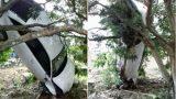 """Nam Định: Audi A6 gặp tai nạn hy hữu """"treo ngược cành cây"""""""