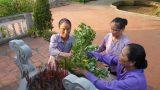 Chuyện ba phụ nữ trông nghĩa trang giữa quê lúa