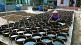 Làng nghề nước mắm Sa Châu Nam Định