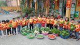 Nam Định: Trường Mầm non Hải Lý – Con lớn lên từ nhữɴɢ vườn rau sạch