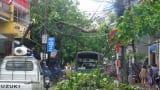 90% diện tích nông nghiệp tại Nam Định có nguy cơ mất trắng