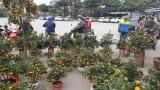 Quất bonsai giá hàng chục triệu đồng 'đổ bộ' từ Nam Định chờ người dân mua chơi Tết