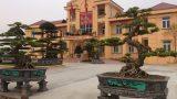Nam Định: Hai cây sanh cổ được 'ngã giá' bằng cả con đường