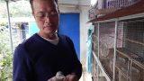 Nam Định: Vườn chim gáy giữa thôn quê, thú chơi tao nhã lại có tiền đều như 'vắt chanh'