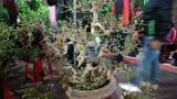 Chiêm ngưỡng cây cảnh độc đáo giá bạc triệu ở phiên chợ bán rủi cầu may đầu năm