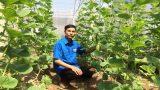 Nam Định: Kỹ sư về quê trồng dưa lê Hàn Quốc, bỏ túi hàng trăm triệu