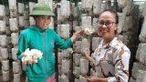 Bất chấp nắng nóng, dân trồng nấm bào ngư vẫn lời tiền triệu/ngày