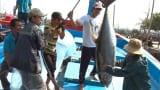 Khó khăn trong việc truy suất nguồn gốc thủy sản tại Nam Định