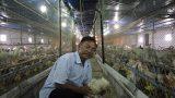 """""""Vua"""" gà đất Nam Định sở hữu 20.000 con gà, lãi 50 triệu đồng/tháng"""