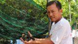 Nam Định: Thu nhập cao từ nghề ương ốc nhồi giống