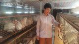 Nam Định: Nuôi con hiền lành bán cho Nhật, kiếm vài chục triệu/tháng