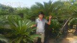 Nam Định: Trồng loài cây chỉ bán lá thôi đã kiếm 10 triệu/tháng