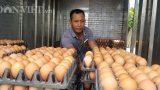 """Nam Định có 1 tỷ phú nuôi gà đẻ vừa """"nín thở"""" chờ giá trứng tăng"""