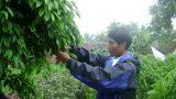 Nông dân Nam Định hồ hởi đi học nghề để làm giàu