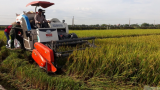 Nông nghiệp Nam Định tăng trưởng khá