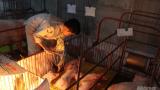 Nam Định: Nuôi lợn đạt tiêu chuẩn VietGAHP thu cả tỷ đồng