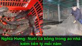 Nghĩa Hưng: Nuôi cá bống trong 'ao nhà', kiếm tiền tỷ mỗi năm