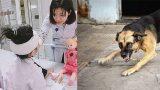 Bé gái 6 tuổi ở Nam Định bị chó nhà cắn rách mặt