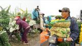 Mỹ Lộc: Cận Tết Nguyên Đán, giá hoa tăng kỷ lục, làng hoa Mỹ Tân vẫn tấp nập kẻ bán người mua
