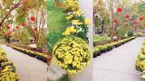 Vụ Bản: Con đường hoa cúc trong khu sinh thái Núi Ngăm ngập tràn sắc xuân