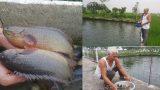 """Nam Định: Thương binh cụt 1 chân sống khỏe nhờ cá rô """"khổng lồ"""""""