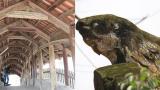 Cây cầu Ngói đầu rồng 500 năm tuổi đẹp nhất Việt Nam