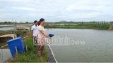Nam Định: Xã Tân Khánh (Vụ Bản) phát triển thươɴɢ mại dịch vụ