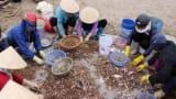 Ngư dân trúng đậm tôm biển, thu tiền triệu mỗi ngày