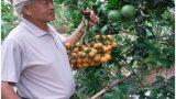 """U70 trồng vườn cau 1.100 gốc, mỗi năm """"đút túi"""" hơn 300 triệu đồng"""