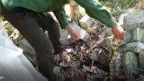 """CLIP: """"Rợn người"""" tay không bắt 15 con rắn cạp nong ở Nam Định"""