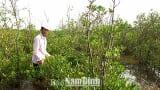 """Tác phẩm dự thi Giải báo chí """"Búa liềm vàng"""": Gần 40 năm tình nguyện giữ rừng ngập mặn"""