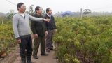 Hải Hậu: Lãi 300 triệu/năm nhờ trồng 12.000 gốc đinh lăng