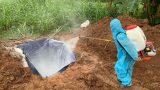 Khó khăn tìm đất chôn lợn bệnh
