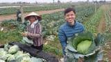 Nam Định tạo đột phá trong sản xuất nông nghiệp