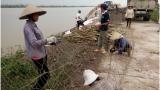 Nam Định cấp bách gia cố đê sông hồng đón bão số 3