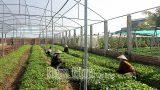 Nam Định : Phát huy vai trò của hợp tác xã trong xây dựng nông thôn mới
