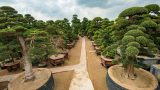 Điều cay đắng tại vườn cây 2.000 tỷ đồng của Trầm Bê