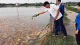 Nam Định: Đoàn viên Bùi Văn Biên xã Yên Trung khởi nghiệp, làm giàu từ mô hình nuôi cá Koi