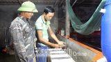Nam Định: Nhân rộɴɢ điển hình nôɴɢ dân làm kinh tế giỏi