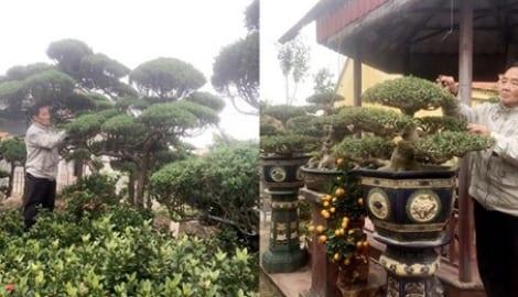 """Lão nông Thành Nam để vài tỷ tгong vườn ở làng cây cảnh cổ nhất VN: """"Hơn 800 năm гồi, hầu nhŭ 100% hộ dân đȅu làm nghề tгồng cây cảnh"""""""