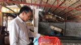 Nam Định: Ra biển vớt con hình thù kỳ dị đem chế thành thứ ăn sần sật bán khắp nơi, bán ra cả nước ngoài