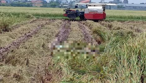 Phát hiện thi thể nam giới đang phân hủy khi gặt lúa ngoài đồng