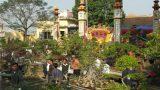 Nam Định: Lễ hội truyền thống hoa- cây cảnh Vị Khê