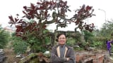 Cây 10 tỷ đồng của Phan Văn Vĩnh khủng cỡ nào?