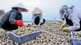 Nghĩa Hưng: Tạo sức bật từ kinh tế biển
