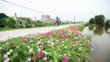 Nam Định: Xây dựng nông thôn mới có điểm khởi đầu, không có kết thúc