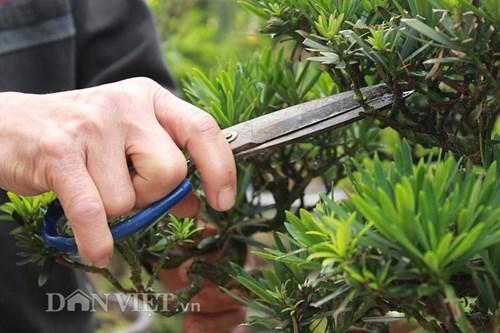 Ông Hoa cho hay, để có thể tạo được các thế cây có ý nghĩa về tâm linh, mang triết lý nhân văn, những người nghệ nhân phải mất nhiều năm kiên trì uốn tỉa tạo dáng cho từng nhánh cây, chồi cây.