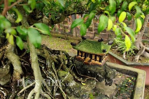 Mỗi góc vườn của ông Hoa, cây bon sai đến cây cổ thụ đều có giá tiền triệu, tiền tỷ.