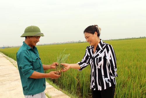 Chị Mai Thị Nhung (phải) đang trao đổi với cán bộ kỹ thuật trồng lúa. Đ.T
