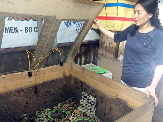 Phương pháp nuôi côn trùng của trang trại chị Xuân tiết kiệm chi phí và mang lại hiệu quả kinh tế cao.